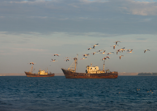 Flamingos passing above old rusty wrecks in harbor, Namibe Province, Tomboa, Angola