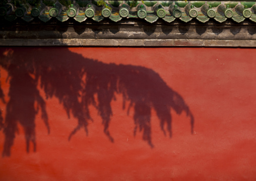 Shadow Of A Tree On A Wall In The Forbidden City, Beijing, China