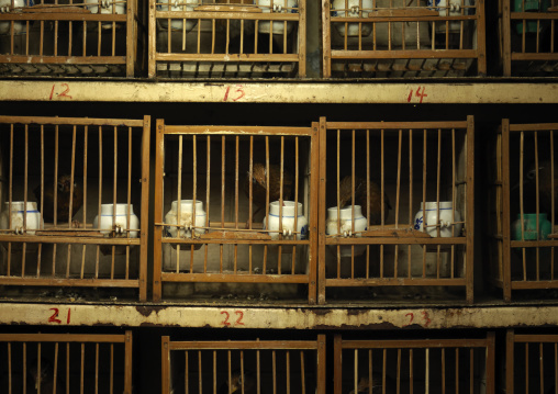 Caged Birds For Sale On A Market, Beijing, China