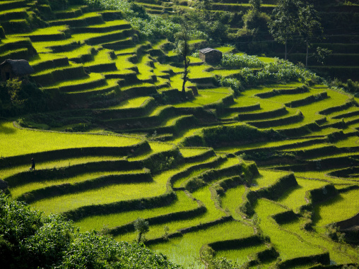 Green Rice Terraces Of Hani People In Yuanyang, Yunnan Province, China