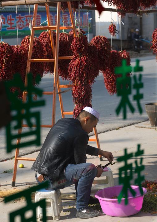 Muslim man cutting fresh chillies, Tongren County, Rebkong, China