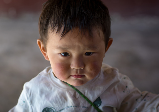 Portrait of a tibetan nomad boy with his cheeks reddened by the harsh weather in Rongwo monastery, Tongren County, Longwu, China