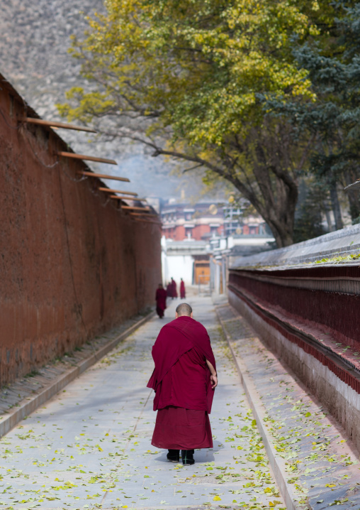 Monks walking in the street of Labrang monastery, Gansu province, Labrang, China