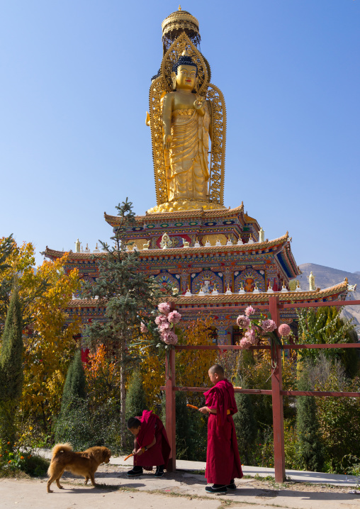 Young monks feeding a dog in front of a golden buddha statue in Wutun si monastery, Qinghai province, Wutun, China