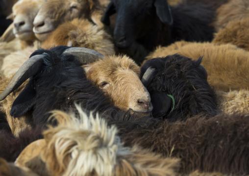 Goats, Serik Buya Market, Yarkand, Xinjiang Uyghur Autonomous Region, China