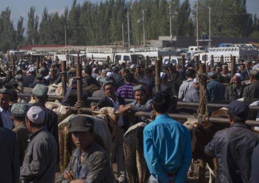Uyghur Men In Kashgar Animal Market, Xinjiang Uyghur Autonomous Region, China