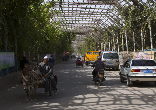 Road Covered To Cultivate Grapes, Xinjiang Uyghur Autonomous Region, China