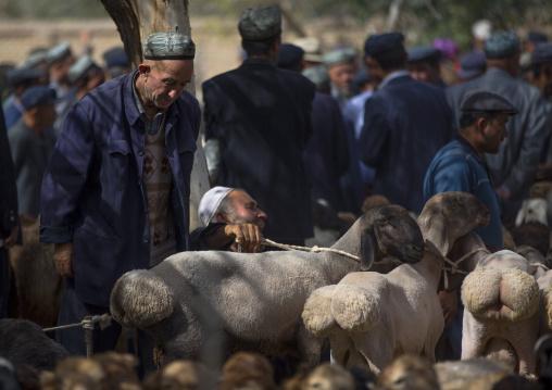 Uyghur Men Choosing Cattle, Opal Village Market, Xinjiang Uyghur Autonomous Region, China