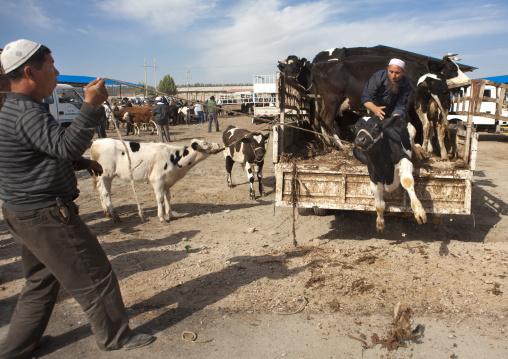 Uyghur Men Getting Cows Down A Truck, Serik Buya Market, Yarkand, Xinjiang Uyghur Autonomous Region, China