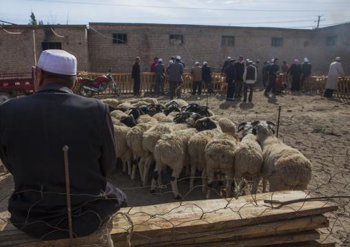 Uyghur Men Discussing Around Cattle, Serik Buya Market, Yarkand, Xinjiang Uyghur Autonomous Region, China