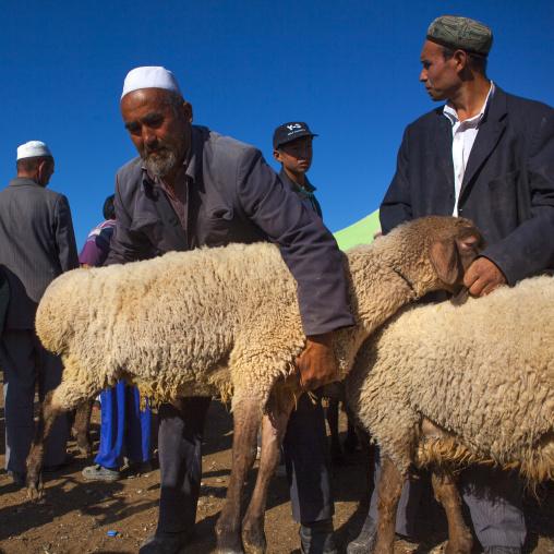 Uyghur Men Checking Cattle In Kashgar Animal Market, Xinjiang Uyghur Autonomous Region, China