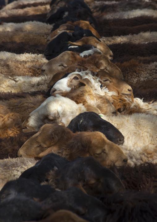 Cattle, Opal Village Market, Xinjiang Uyghur Autonomous Region, China