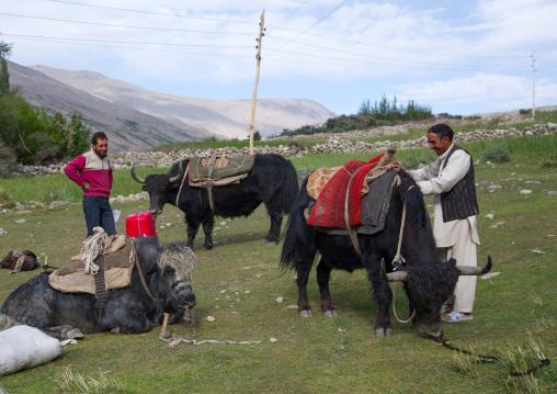 Wakhi men packing yaks for a treck, Badakhshan province, Wuzed, Afghanistan