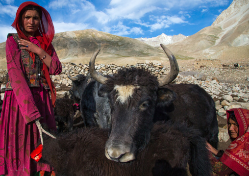 Wakhi nomad women with yaks, Big pamir, Wakhan, Afghanistan