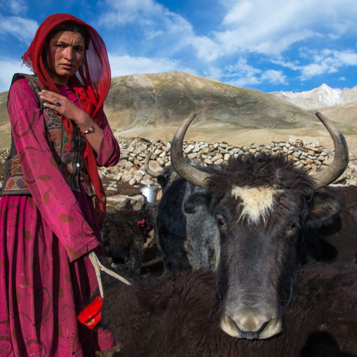 Wakhi nomad woman with a yak, Big pamir, Wakhan, Afghanistan