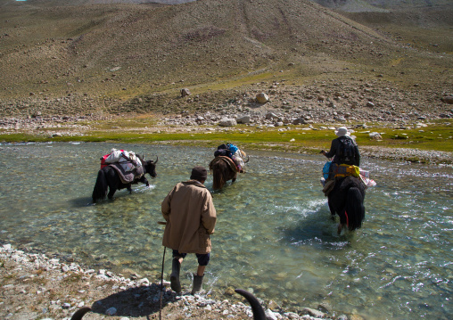 Yaks crossing a river during a treck, Big pamir, Wakhan, Afghanistan