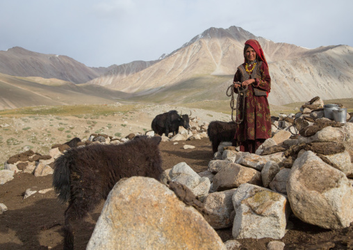 Wakhi nomad woman taking care of her yaks, Big pamir, Wakhan, Afghanistan