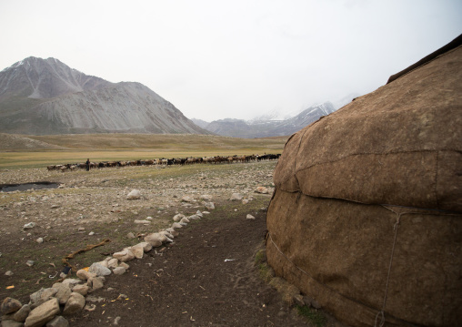 Wakhi sheperd looking for grass, Big pamir, Wakhan, Afghanistan