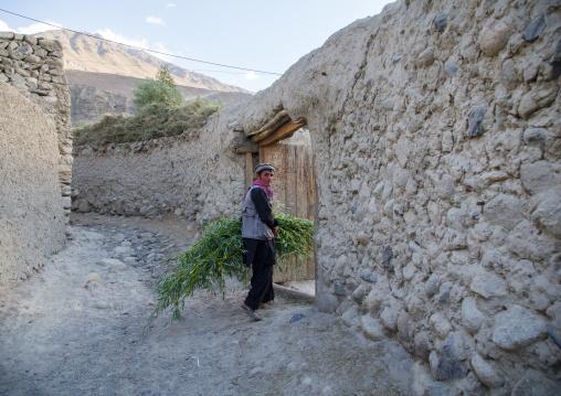Afghan man carrying grass for his cows, Badakhshan province, Khandood, Afghanistan