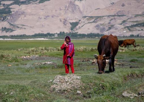 Afghan teenage girl with her cows in a field, Badakhshan province, Khandood, Afghanistan