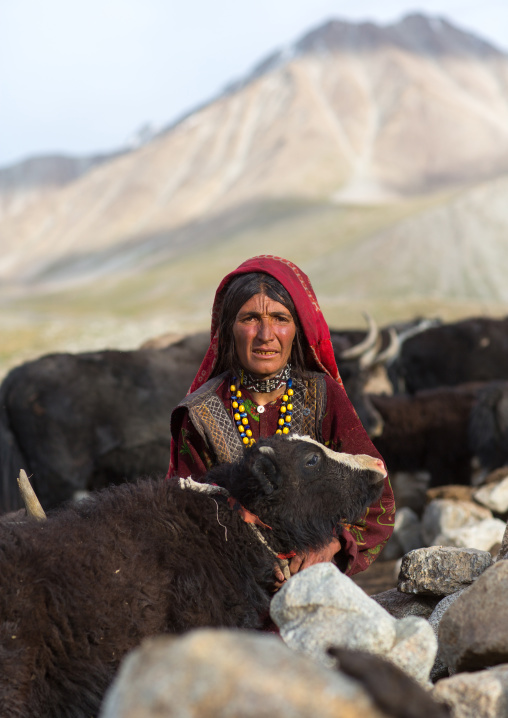 Wakhi nomad woman milking with her yaks, Big pamir, Wakhan, Afghanistan