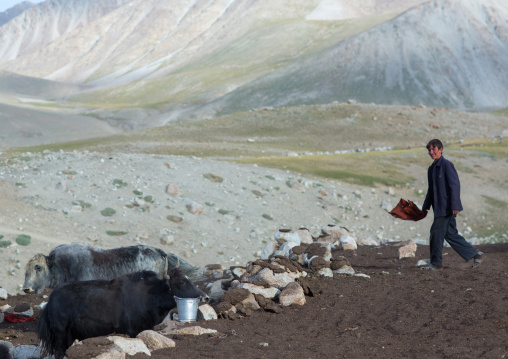 Wakhi teenage boy with his yaks, Big pamir, Wakhan, Afghanistan