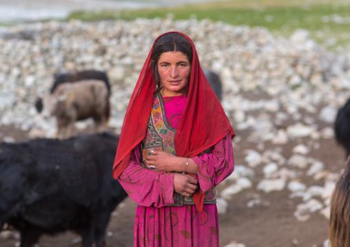 Wakhi nomad woman with her yaks, Big pamir, Wakhan, Afghanistan
