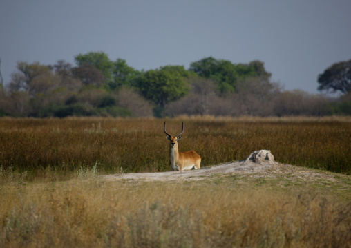 Moremi Wildlife Reserve, Botswana