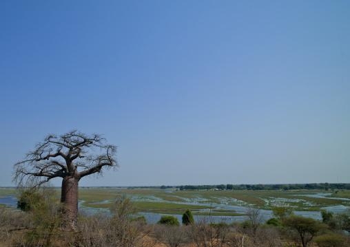 Bogs Upstream From Victorial Falls, Botswana