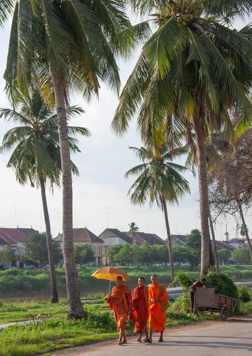 Cambodian monks walking in the street with umbrellas, Battambang province, Battambang, Cambodia
