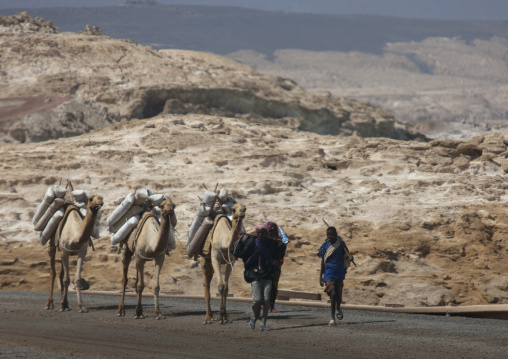 Camels Carrying Bags Of  Salt, Lake Assal, Djibouti