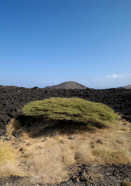 Lava Around Tadjourah, Djibouti