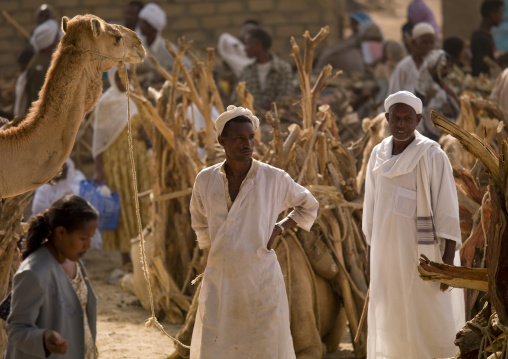 Eritrea, Horn Of Africa, Keren, monday camel market