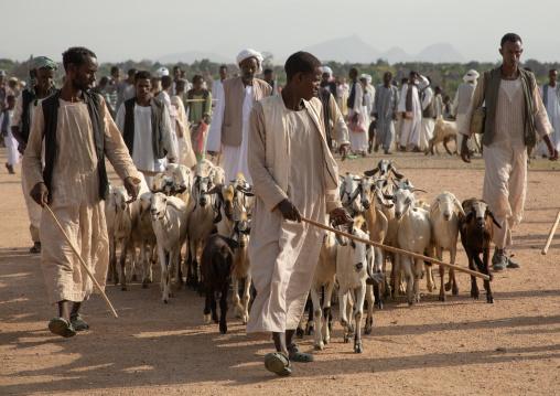 Eritrean men in the livestock market, Gash-Barka, Agordat, Eritrea