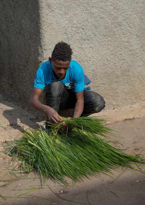 Eritrean man selling grass for an orthodox celebration, Central region, Asmara, Eritrea