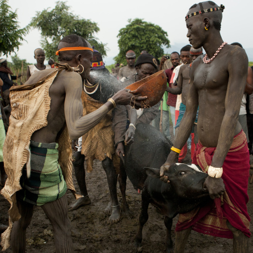 Bodi Man Purifying The Cow Before Sacrifice During Kael New Year Ceremony Ethiopia