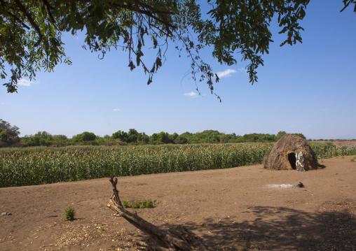 Nyangatom Tribe Farm, Kangate, Omo Valley, Ethiopia