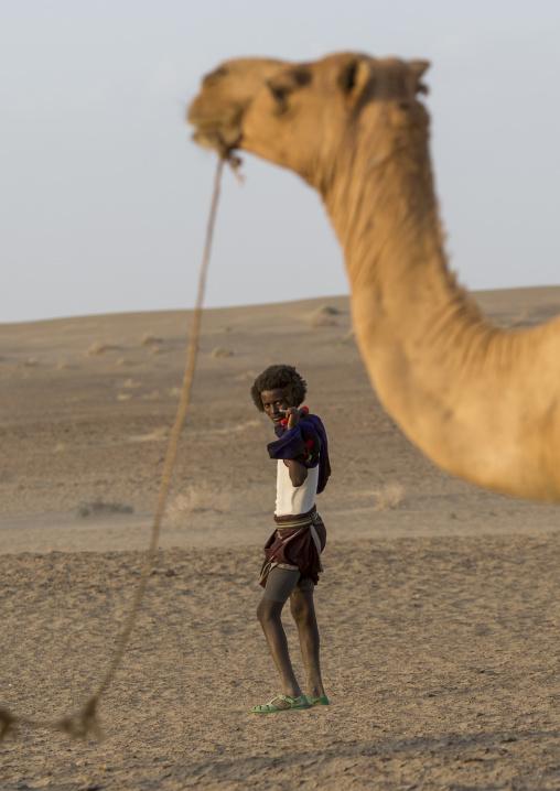 Camel Caravan In Danakil Desert, Assayta, Ethiopia