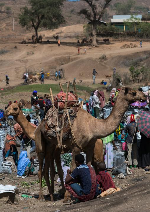 Camel market, Oromo, Sambate, Ethiopia