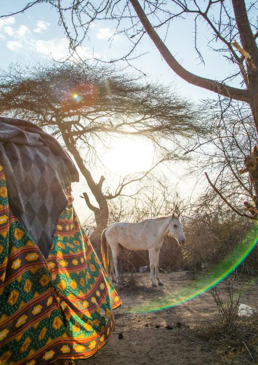 White horse during the Gada system ceremony in Borana tribe, Oromia, Yabelo, Ethiopia