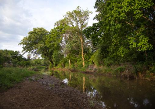 River in the Bodi tribe territory, Omo valley, Hana Mursi, Ethiopia