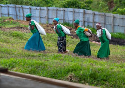 Ethiopian women carrying bags of coffee beans in a farm, Oromia, Shishinda, Ethiopia