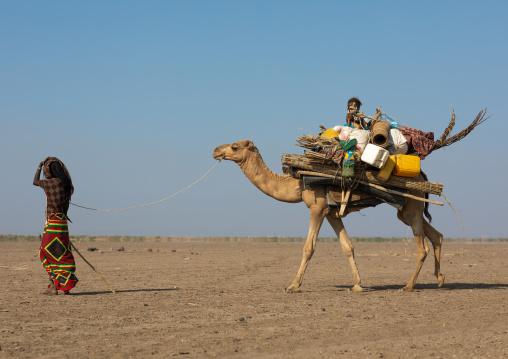 Afar people leading a camel caravan, Afar region, Semera, Ethiopia