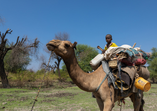 Afar children on a camel caravan, Afar region, Semera, Ethiopia
