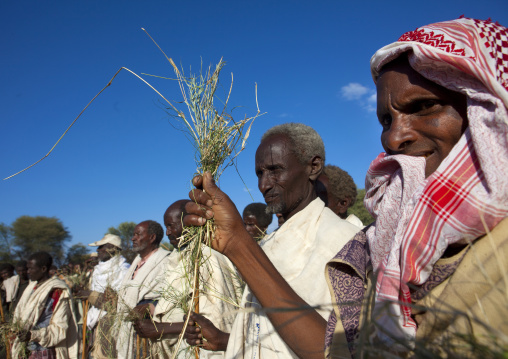 Group Of Former Karrayyu Tribe Leaders Holding Grass To Be Exchanged With The New Leader During Gadaaa Ceremony, Metehara, Ethiopia