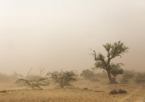 Sand storm in the desert, Rajasthan, Jaisalmer, India