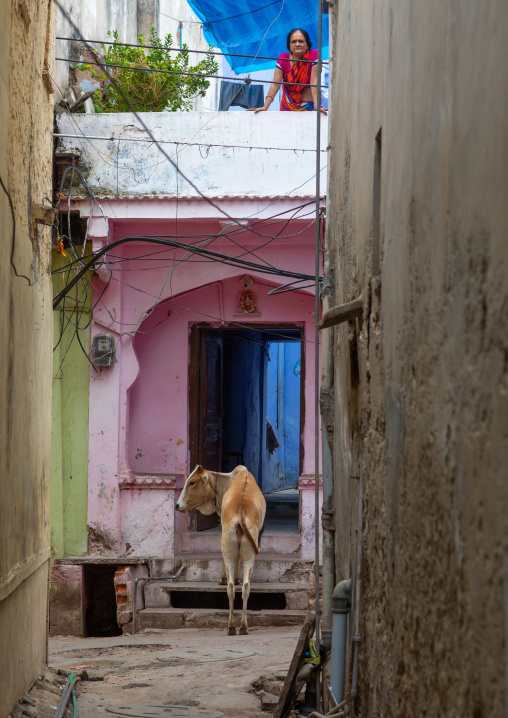 Cow at the entrance of an old house, Rajasthan, Bundi, India
