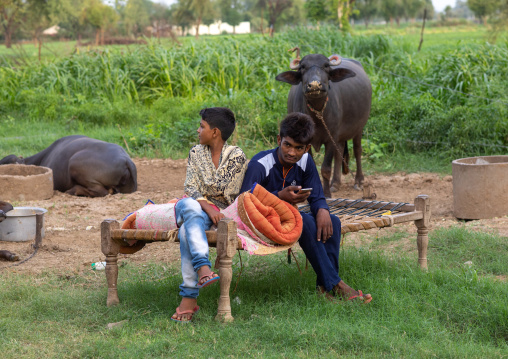 Indian children sit on a bed in front of swamp buffaloes, Rajasthan, Baswa, India