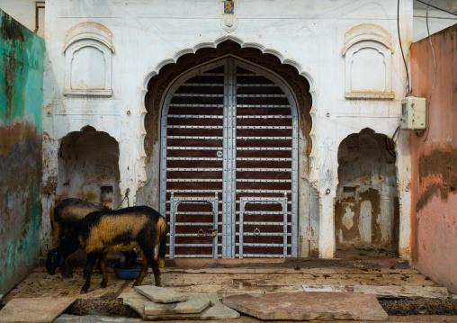 Door of an old historic haveli, Rajasthan, Nawalgarh, India
