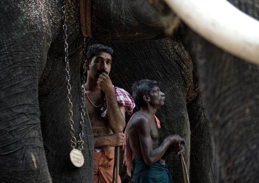 Cornacs Waiting Alongside Their Elephants During Jagannath Temple Festival, Thalassery, India